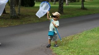 虫取り網の正しい使い方を息子さんに教えられますか?